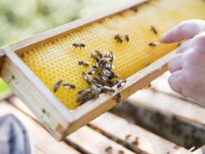 bienen littlebeefresh